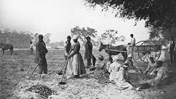 Рабы на плантации Джеймса Хопкинсона